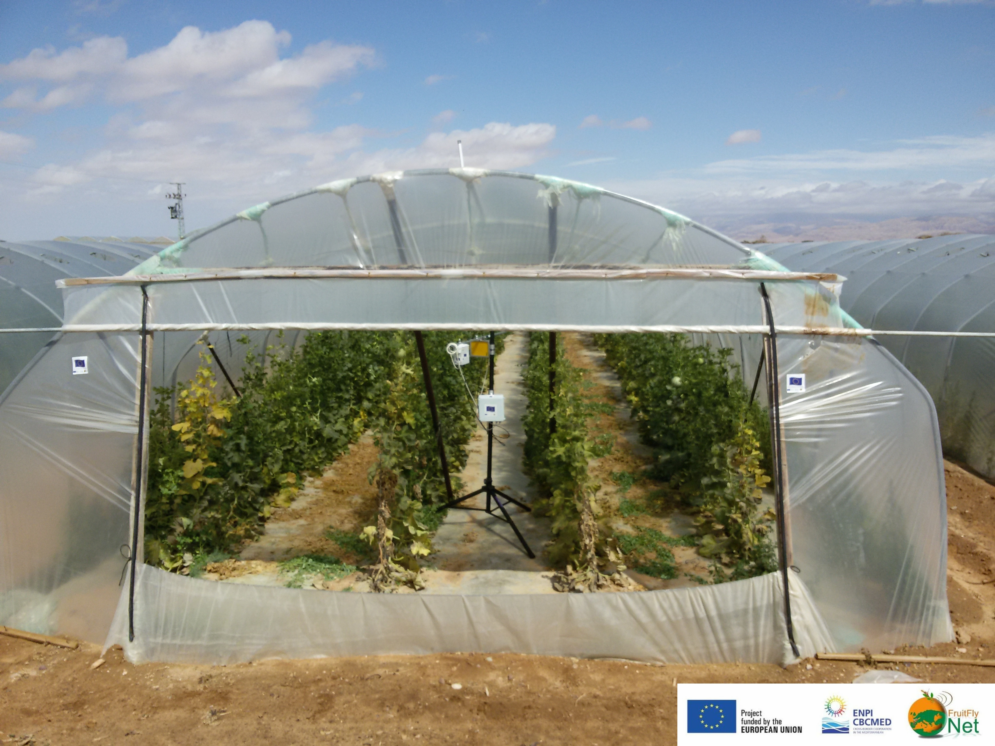 The first fruit fly Real Time Insect Counting Traps (ReTIC) in melon tunnels in the Arava, Israel